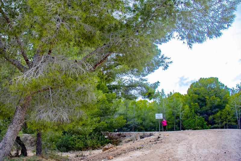 Benidorm da luz verde a los proyectos EDUSI en El Moralet, Colonia Madrid y Els Tolls