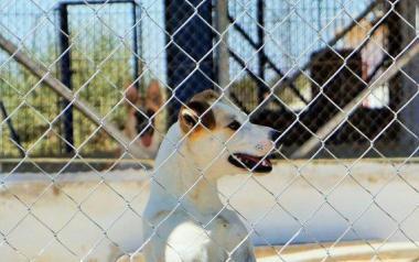 L'Ajuntament concedix una subvenció de 40.000 euros a la Societat Protectora d'Animals i Plantes